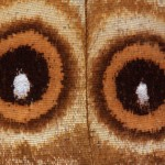 eyes-199943_1920