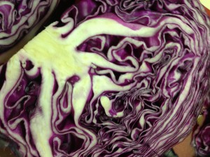 red cabbage detail